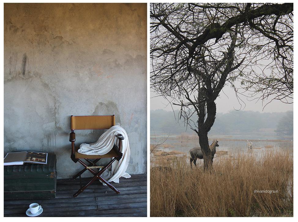 wetlands, nilgai, campaign, furniture, rustic, indian, interior, balcony