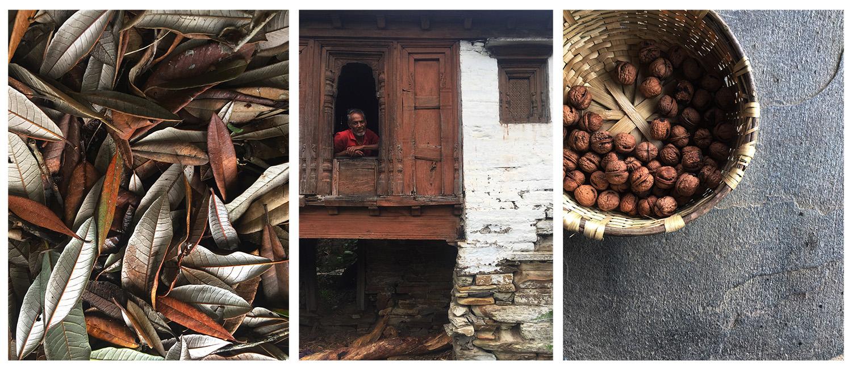 koti banal, walnuts, leaves, india autumn