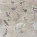 birds, india, migratory, art, wall mural