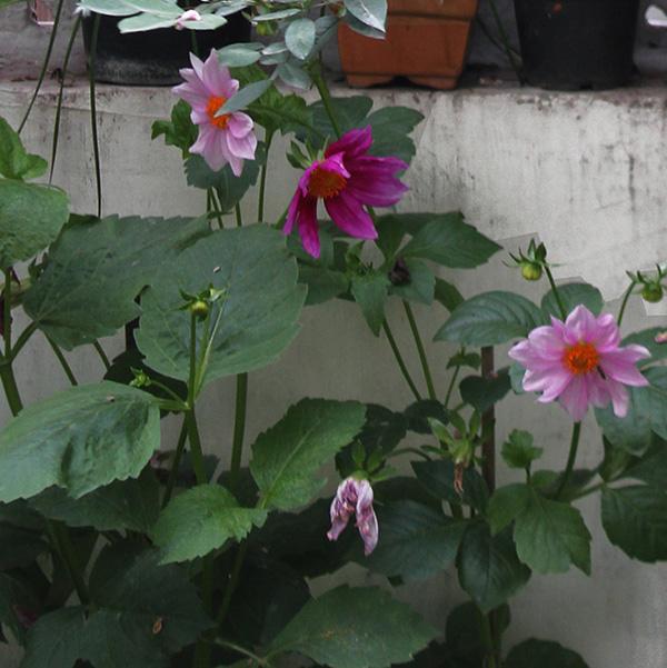 home, garden, natural, living, delhi, interiors